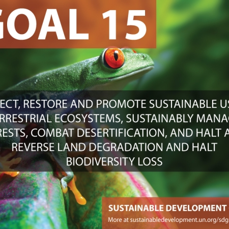 fifteen sustainable development goals